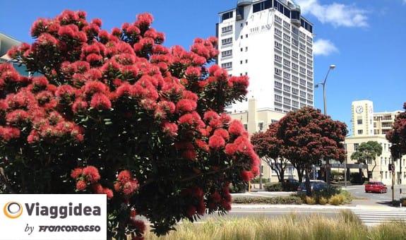 Viaggidea tour Nuova Zelanda